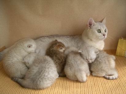 Беременность у кошек картинки