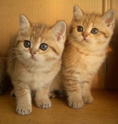 http://peppercats.narod.ru/foto/IMGP2728_mini.jpg