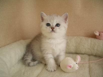 Фото кота 1 месяц