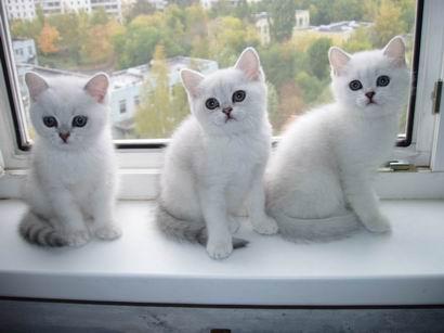 http://peppercats.narod.ru/foto/PA083392_mini.JPG