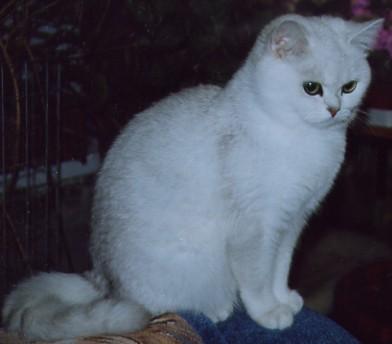 http://peppercats.narod.ru/foto/petunia.jpg